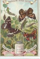 Images/Chromo/Papillons De L'Europe Centrale/Cie Liebig/Sanguinetti N°518/ Vers 1895   LBG11 - Liebig