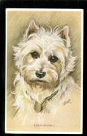 Chien - Chiens - Hond - Honden - Chiens