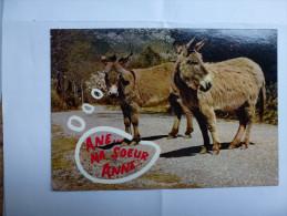 CP , Ane , Anes - Donkeys