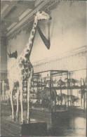 Tervuren, Musee Du Congo, Feldpost, Schutzverwaltung Französischer Berg-und Hüttenwerke, Lüttich, Postkarte - Tervuren