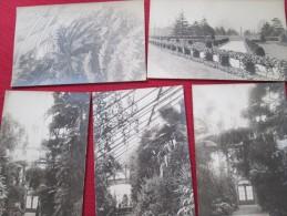 8 CARTES PHOTO ROYAL GARDENS  1910 RARE - London Suburbs