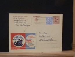 53/304A     PUBLIBEL  CP BELGE - Knaagdieren