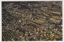 Carte Postale Moderne Non écrite Seine Et Marne 77 - Thomery, Les Murs à Raisin Chasselas - France