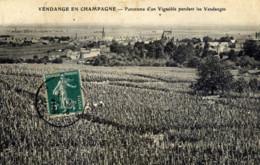 51  Vendange En Champagne  Panorama D´un Vignoble - France