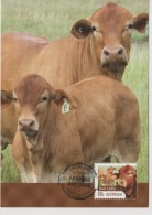 Australia Maximum Card Mi 3757 - Postal Stationery - Farming Australia - Beef Cattle - Cow - 2012 - Maximumkaarten