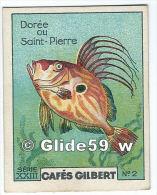 Chromo - Collection Cafés Gilbert - Dorée Ou Saint-Pierre - N° 2 - Série XXIII - Thé & Café