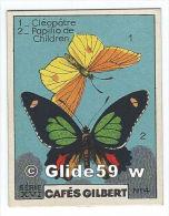Chromo - Collection Cafés Gilbert - 1) Cléopâtre - 2) Papilio De Children - N° 4 - Série XVI (papillons) - Tea & Coffee Manufacturers