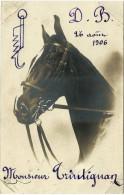 CPA De 1906-belle Tête De Cheval-mention Monsieur Trintignan - Horses