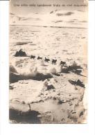 75115) Cartolina-spedizione Polare-una Slitta Della Spedizione Tirata Da Cani Esquimesi-nuova - Non Classificati