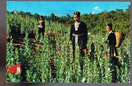 Méo Je Fille De Tribu Lill Au Milieu De Pavot D'opium Piants Champ(domaine) à Tringle D'or - Thaïlande