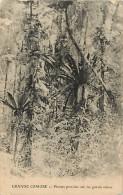 Pays Divers- Afrique -ref D784- Grande Comore - Plantes Parasites Sur Les Grands Arbres  - - Comores