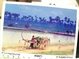 CAMBOGIA KHMER  LAVORO RISO CAMPI  CON CARRO    N1980   EW1697 - Cambogia