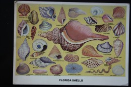 Florida Shell Collection   - Old Postcard 1960s  - Seashell - Poissons Et Crustacés