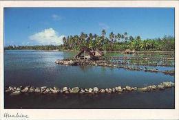 Polynésie Française    H2    Pièges à Poissons De Maeva - French Polynesia