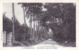 85 - Noirmoutier -  Une Allee Du Bois De La Chaize - Noirmoutier