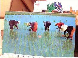 THAILAND RISO  RISAIE CONTADINI WOMEN  MONDINE   N1975   EW1774 - Tailandia