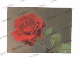 Fiore Flower Rosa Rose - Non Classificati