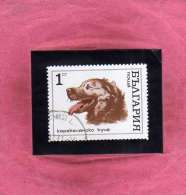 BULGARIA - BULGARIE - BULGARIEN 1970 FAUNA DOGS GOLDEN RETRIEVER DOG CANI CANE USATO USED OBLITERE´ - Gebraucht