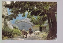 Les Belles Couleurs De Nos Provinces 13.029 Bergère Et Son Troupeau - Elevage