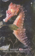 JERSEY ISL. - Year Of The Ocean/Short Snouted Seahorse, CN : 65JERA(0 With Barred), Tirage %25000, Used - United Kingdom