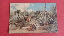 Tresco Abbey Garden Scilly -------------     ---------------  Ref 1884 - Angleterre