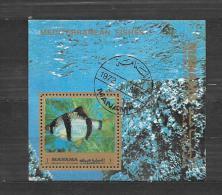 AJMAN   Pesci Poissons Fisches   BF /US 1972 - Ajman