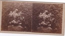 Vieille Photo Stereoscopique Artistique 1925 Naperon Et Bouquet De Fleurs Marguerite Rose... - Stereoscopic