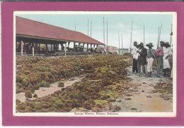 SPONGE MARKET, NASSAU , BAHAMAS - Bahamas