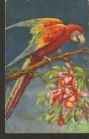 A60. Switzerland - Carlo FAUNA Bird Parrot Illustration -  STZ.F. No.1356 - Chiostri, Carlo
