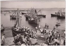 Finistère : DOUARNENEZ  :  Sardinier  Au  Port - Douarnenez