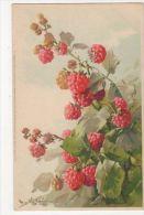 C. Klein, Fruit, Rasberries, Meissner & Buch 1331 Chromo Postcard, B265 - Ilustradores & Fotógrafos