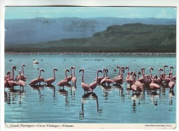 CP336 Greater Flamingoes Flamants Nigeria Nice Stamp Mi 344 Woman Working In Backyard Vegetable Garden - Nigeria