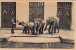 Antwerpen - Anvers - Jardin Zoologique - Dierentuin - Olifanten Eléphants (animation) - Antwerpen