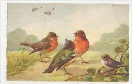 C. Klein, Birds, No. 131 Art Postcard, B265 - Ilustradores & Fotógrafos