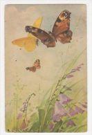 C. Klein, Butterflies, No. 1236 Postcard, B265 - Ilustradores & Fotógrafos