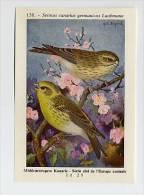FORT - Vogels / Oiseaux / Birds (1959) - 138 - Middeneuropese Kanari, Serin Cini De L'Europe Centrale, Serinus - Cromos