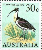 Australia 1966 30c Straw-necked Ibis MNH - 1966-79 Elizabeth II