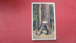 - California> Vehicle thru tree  Redwood Highway y - ------ref 1891