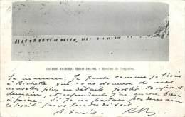 Exp�dition Antartique Charcot 1903-1905 - Mon�me de Pingouins