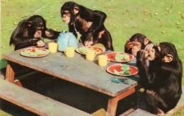 Postcard - Chimpanzees At London Zoo. 14 - Monkeys