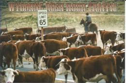 CPM USA, Wyoming, Rush Hour Traffic - Cow -boy, Road - Troupeau Sur La Route - Cody