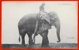 CPA (Cirque) HAGENBECK - L´ Elephant PUNCHI ** Circus - Circus