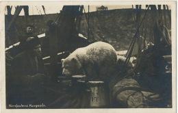 Norway Nordpolens Kongeson Polar Bear Tamed On A Boat  P. Used Nordkapp Cap Nord Polar 1930 - Norvège