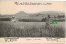 Carte Postale Ancienne De BRUYERES – EFFET DU SULFATE D'AMMONIAQUE SUR AVOINE CHEZ M. FRAGET, SECRETAIRE DU SYNDICAT ... - Bruyeres