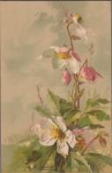 C. KLEIN-Bouquet De Fleurs 1903 - Klein, Catharina