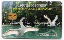 GUATEMALA CYGNES - Guatemala