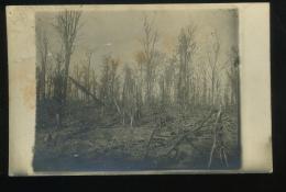Somme 80 Bois De  Moreuil Carte Photo Etat Moyen - Moreuil