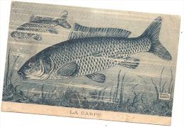 La Carpe Par Illustrateur  Raoul Guinot - Nombreux Plis - Pesci E Crostacei