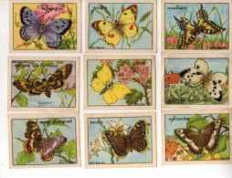 IMAGES BON POINT ECOLE Illustrateur CALVET ROGNIAT Lot De 14 (Papillons) - Other