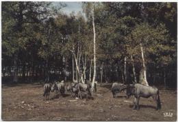 CPM - CHÂTEAU DE THOIRY - Réserve Africaine - GNOUS BLEUS - Edition Du Château - Thoiry